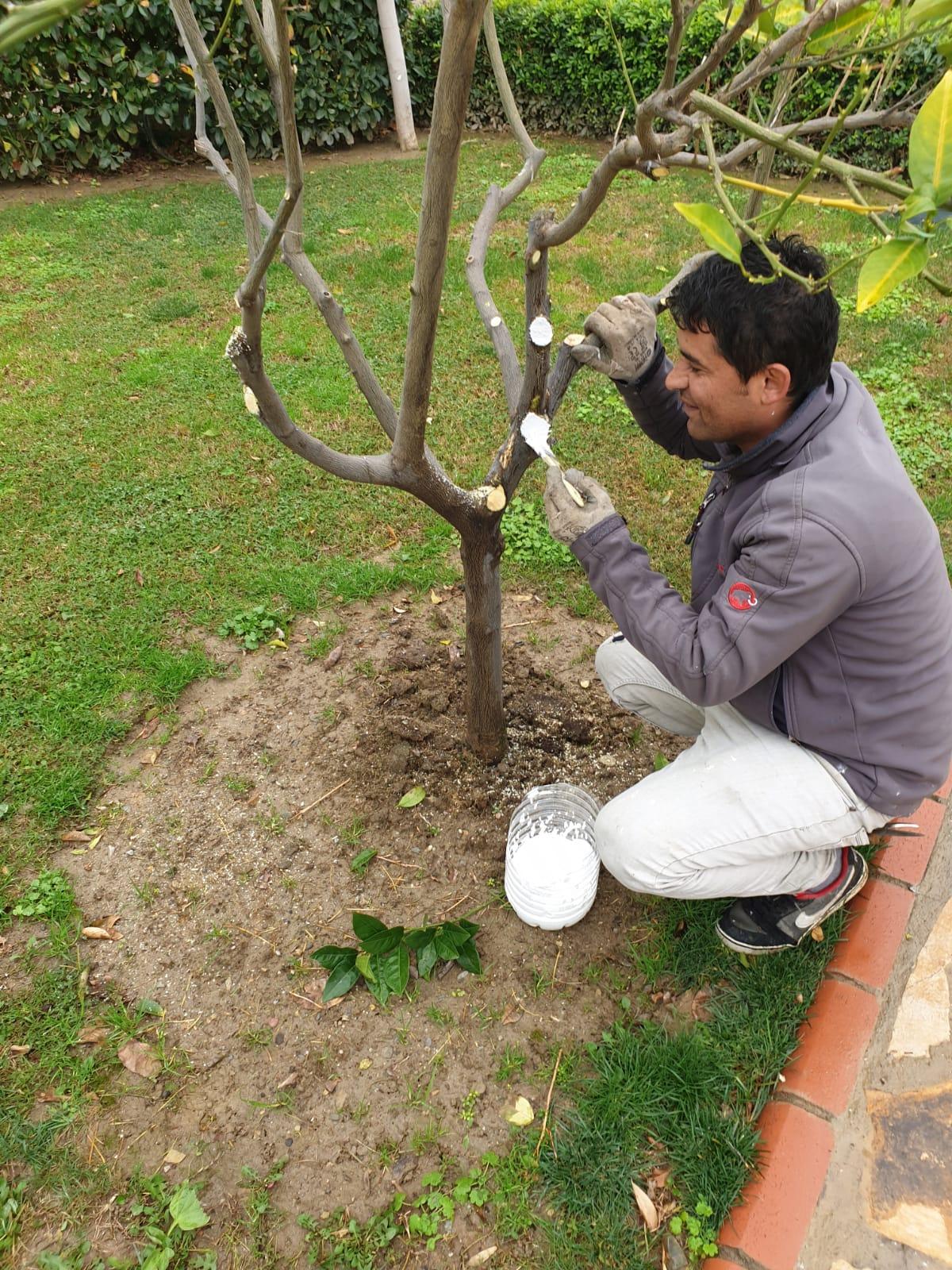 Mevsimlik bahçe işleri